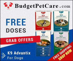 Get 4 Free Doses with 12 Pack & 2 Free Doses with 6 Pack. K9 Advantix is a broad-spectrum treatment that provides protection to dogs against fleas within 24 hours and ticks within 48 hours. Buy Now to Get Extra 5% Discount and Free Shipping across USA.