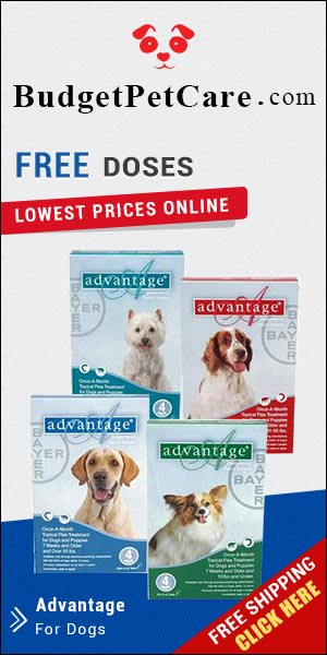 Advantage is a monthly topical treatment for killing and controlling fleas. Buy Now to Get Extra 5% Discount and Free Shipping across USA. Also Avail 4 Free Doses of Advantage with 12 Pack & 2 Free Doses with 6 Doses Pack.
