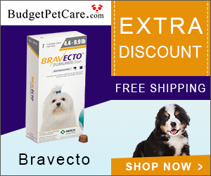 Bravecto is an easy to administer tasty chew that not only kills fleas and ticks but also prevents flea infestations for 12 weeks. It also kills lone star ticks for 8 weeks.