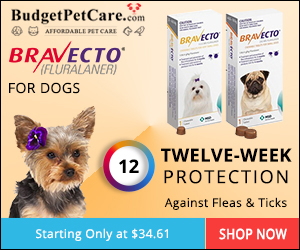 Bravecto Chewable Oral Flea & Tick Treatment for Dogs Online at 5% Extra OFF & Free Shipping